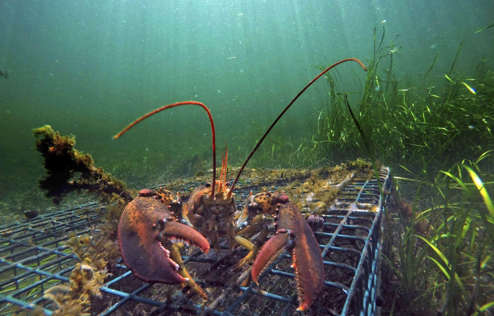 D'un point de vue strictement environnemental, force est de constater que les océans se vident plus rapidement que leur capacité de reproduction.