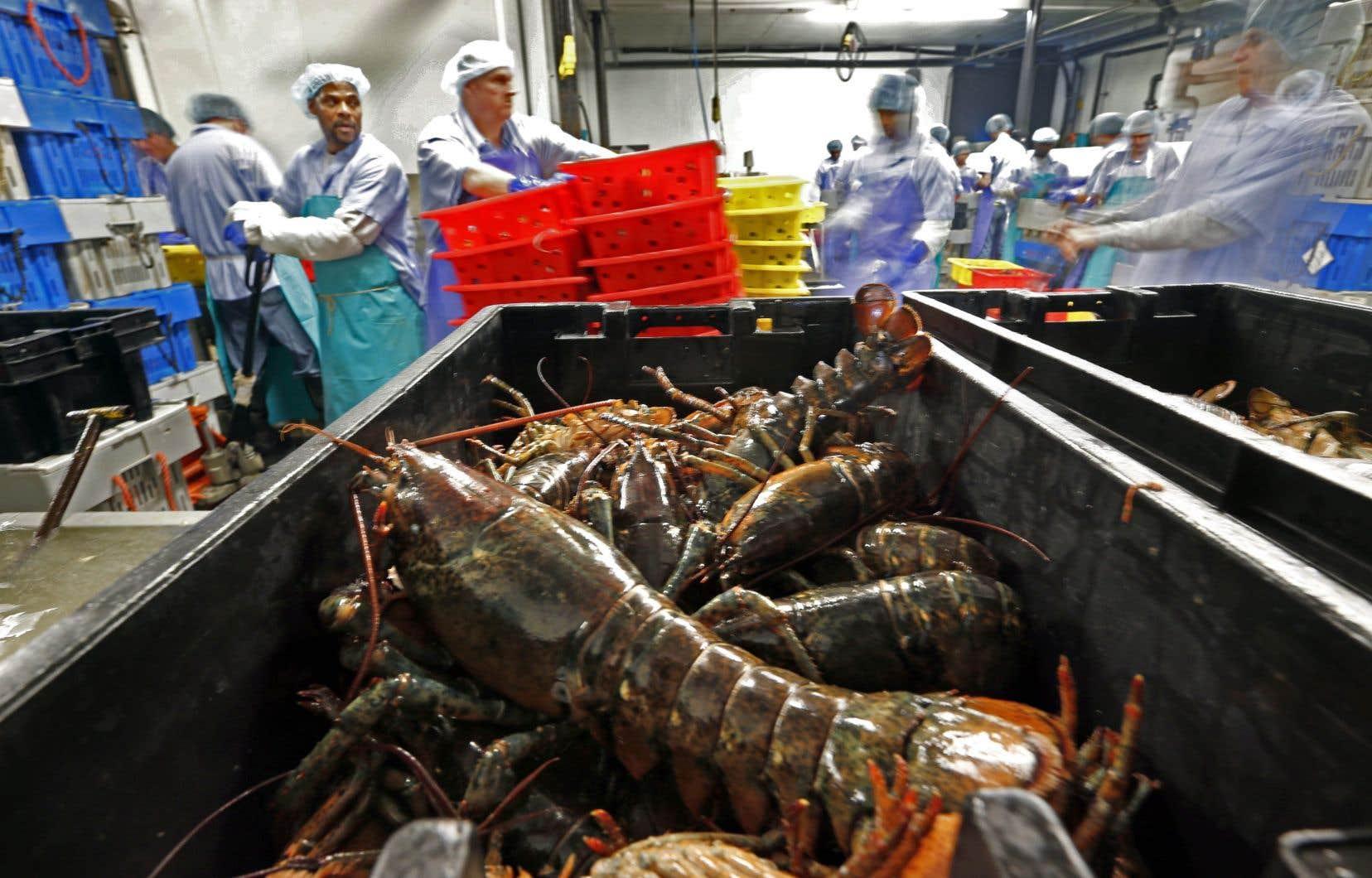 L'Association des transformateurs de homard du Nouveau-Brunswick et de la Nouvelle-Écosse soutient que son secteur subit des retards en raison d'un changement récent qui fait que les travailleurs migrants doivent se soumettre à un contrôle biométrique.