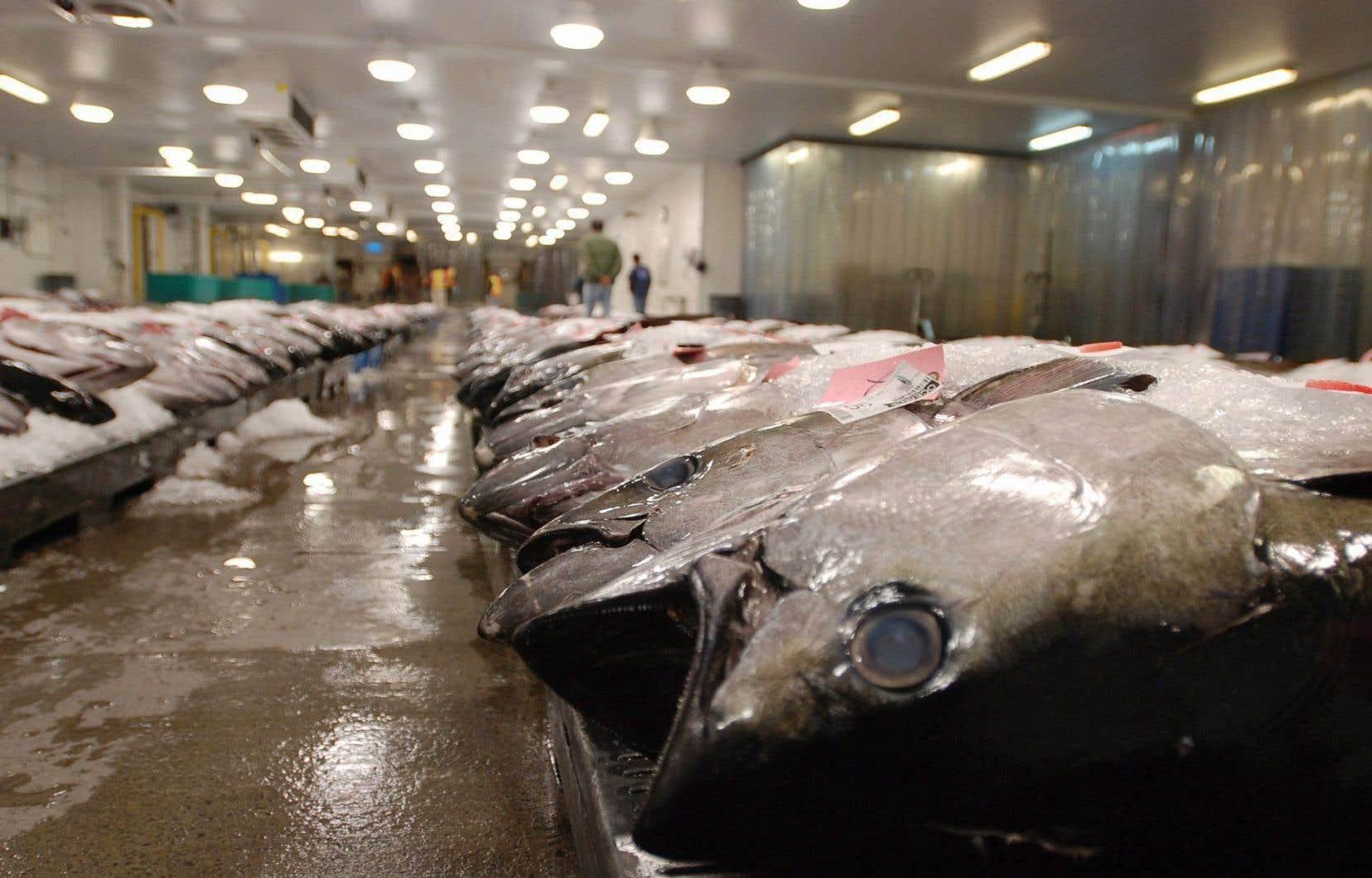 Une grande partie des humains dépendent des océans pour se nourrir ou gagner leur vie.