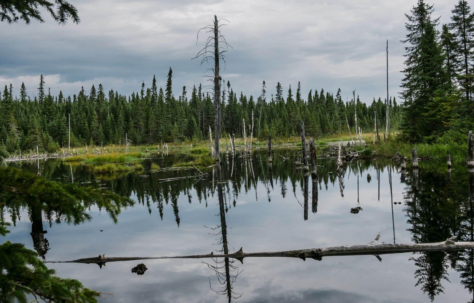 Des milieux humides comme celui-ci sont situés à proximité d'une mine de lithium en voie d'être exploitée, près de La Motte, en Abitibi.