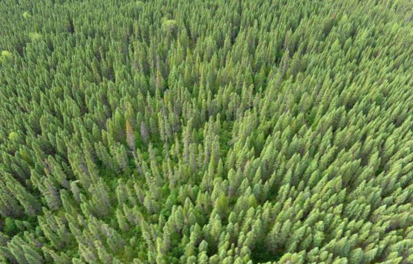 Le Fonds vert, créé en 2006, deviendra donc le Fonds d'électrification et de changements climatiques, et son conseil de gestion sera aboli.