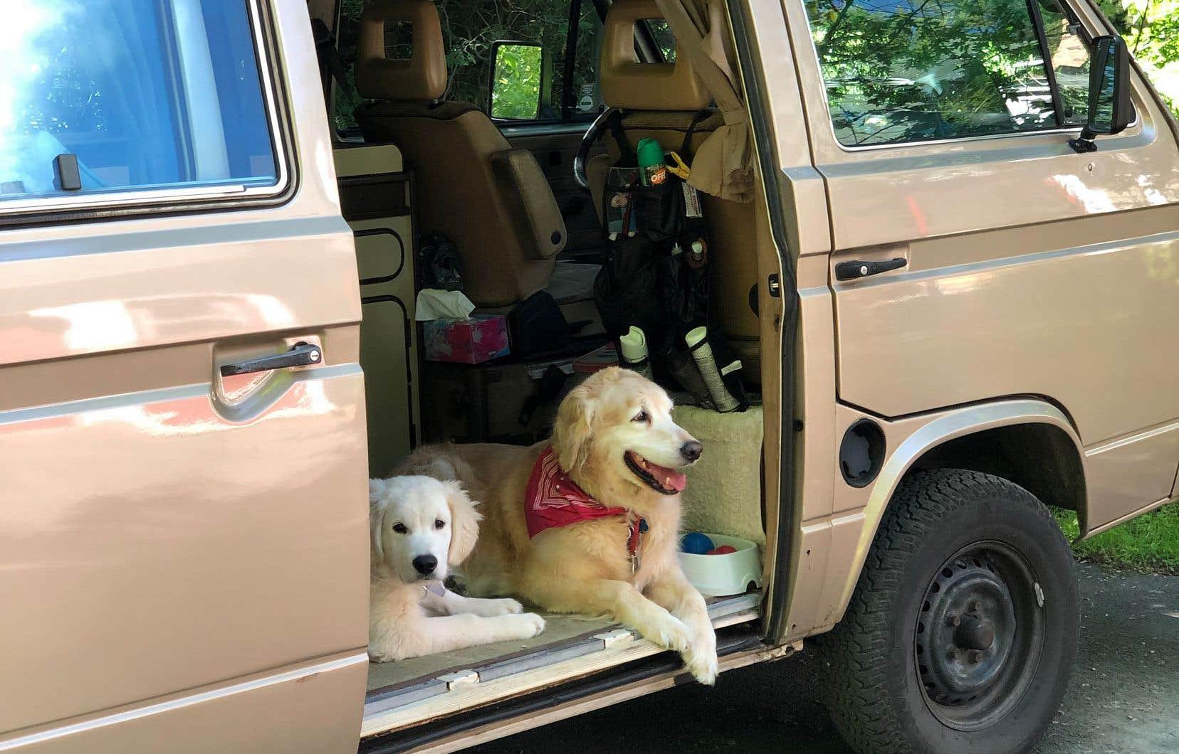 Bouille LeBlanc et Bocou-Bocou attendant leur maître. Dans le Westfalia 86, le souffle des chiens sert de climatisation.