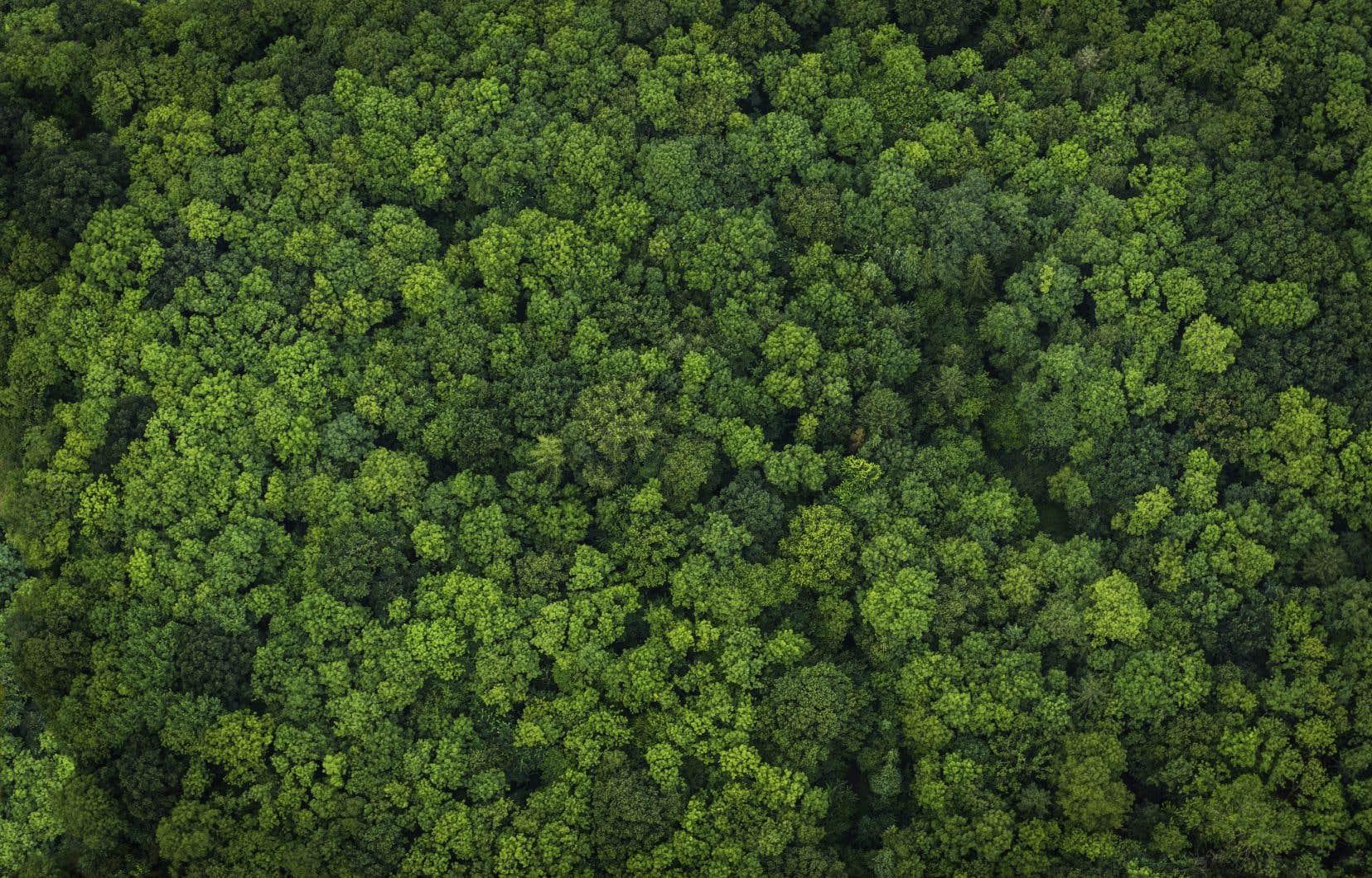 Selon une étude, ces nouveaux arbres pourraient aspirer près de 750 milliards de tonnes métriques du dioxyde de carbone qui piège la chaleur dans l'atmosphère.
