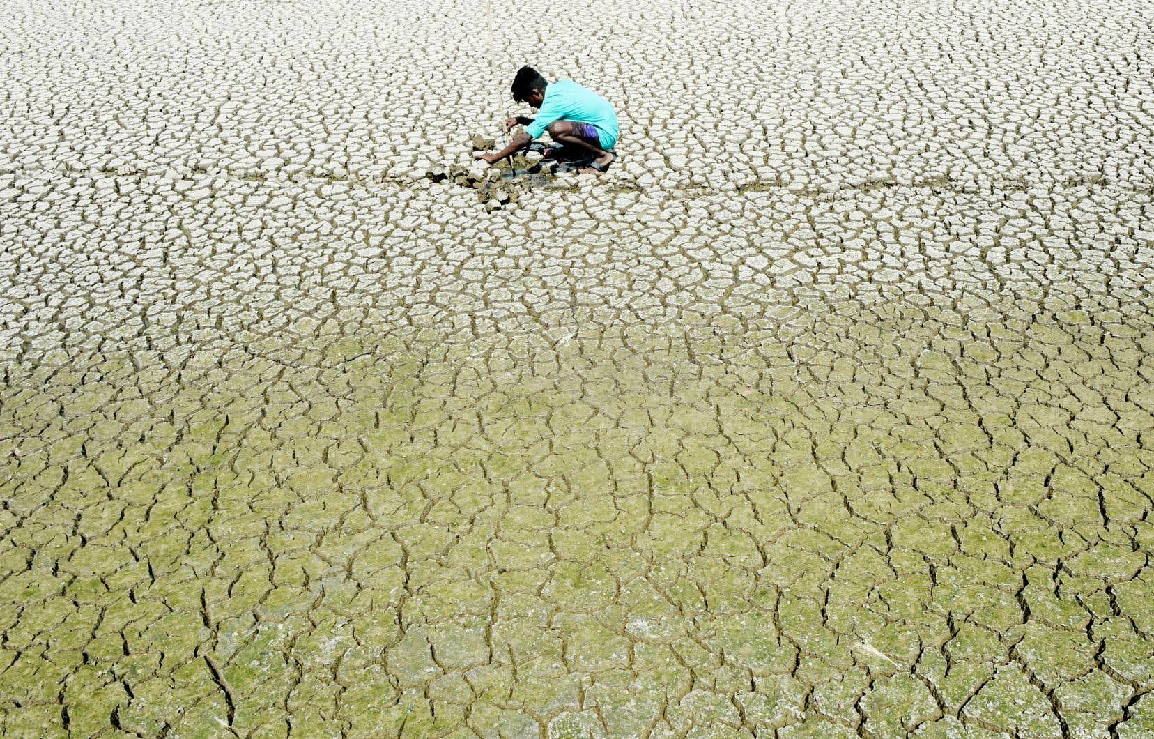 Le lac Chembarambakkam, en Inde, était asséché à près de 99% en avril dernier.