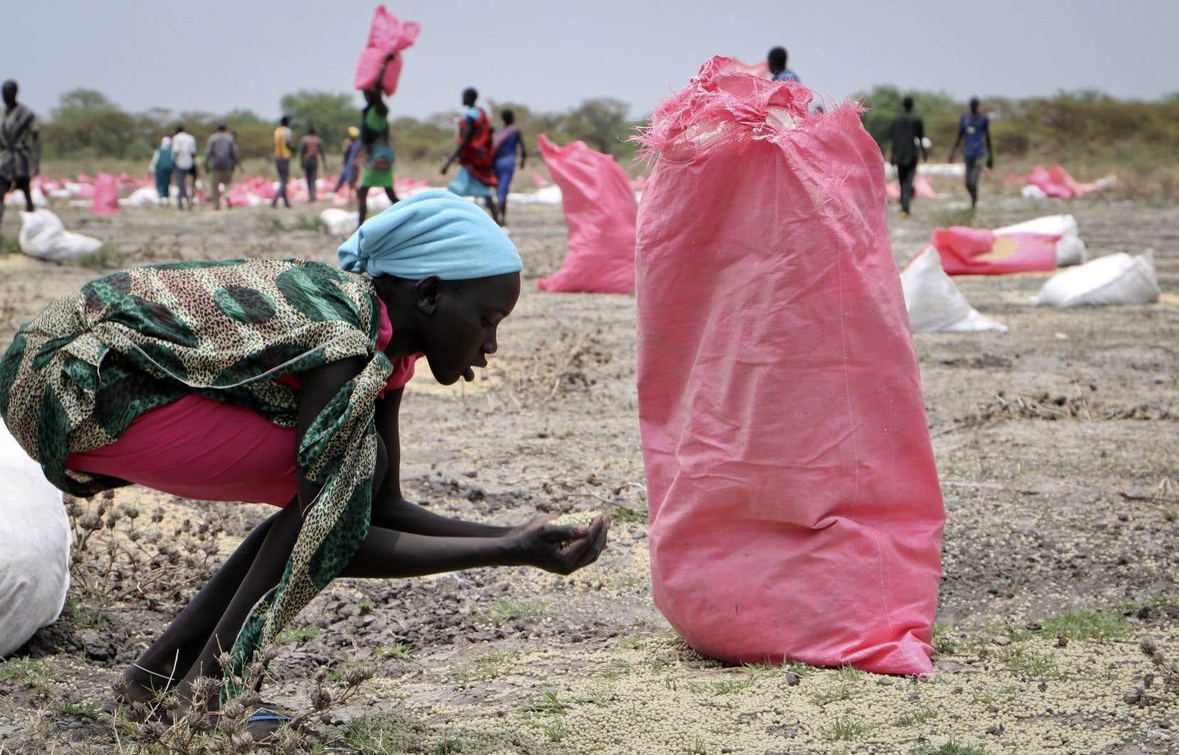 Une femme ramasse des grains de sorgo tombés au sol après un ravitaillement aérien de nourriture effectué par le Programme alimentaire mondial (PAM) dans la ville de Kandak, au Sud-Soudan.