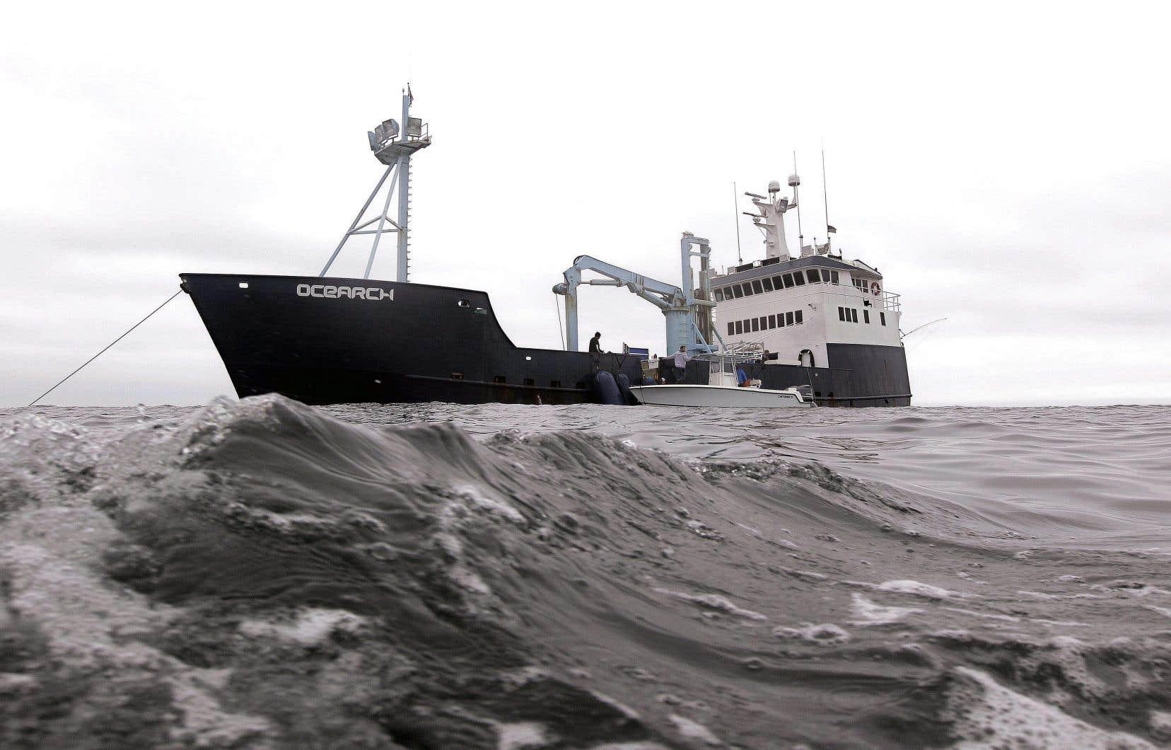 <p>L'organisme américain Ocearch marque les requins à l'aide d'une puce satellitaire, qui permet à son équipe de scientifiques de suivre les déplacements de cesgrands prédateurs marins et leurs habitudes pour se nourrir, notamment.</p>
