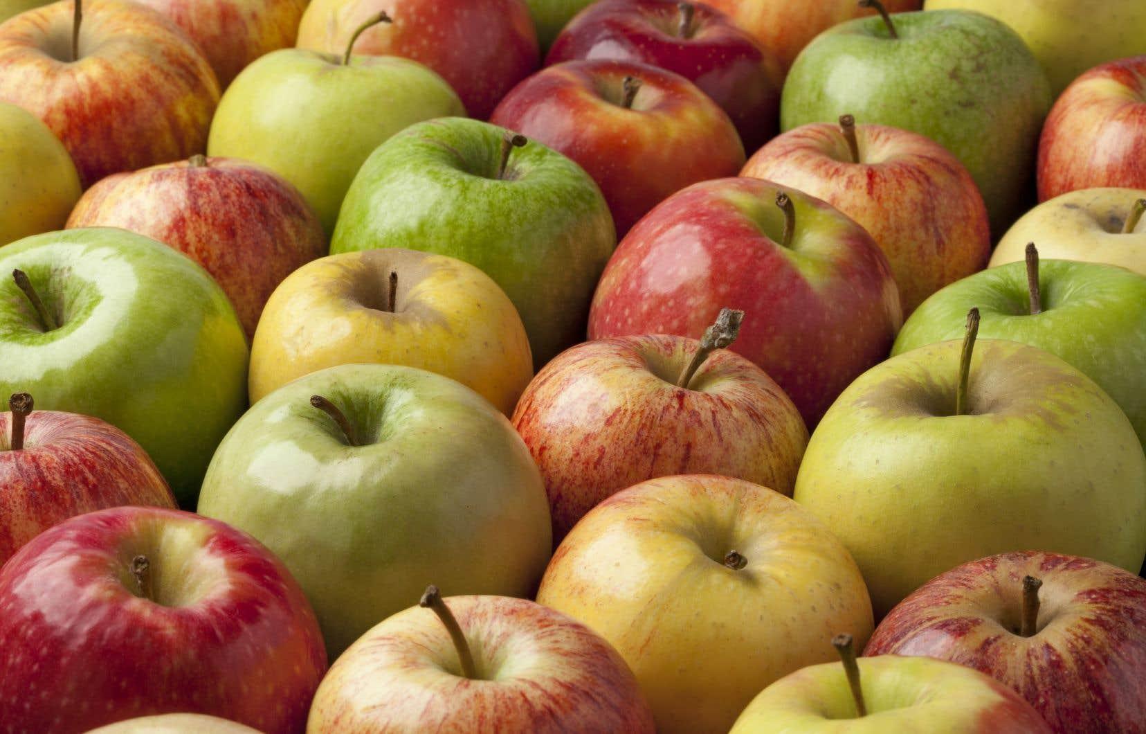 Les chercheurs de l'étude affirment que le microbiome des pommes biologiques était globalement plus diversifié que celui des pommes traditionnelles.