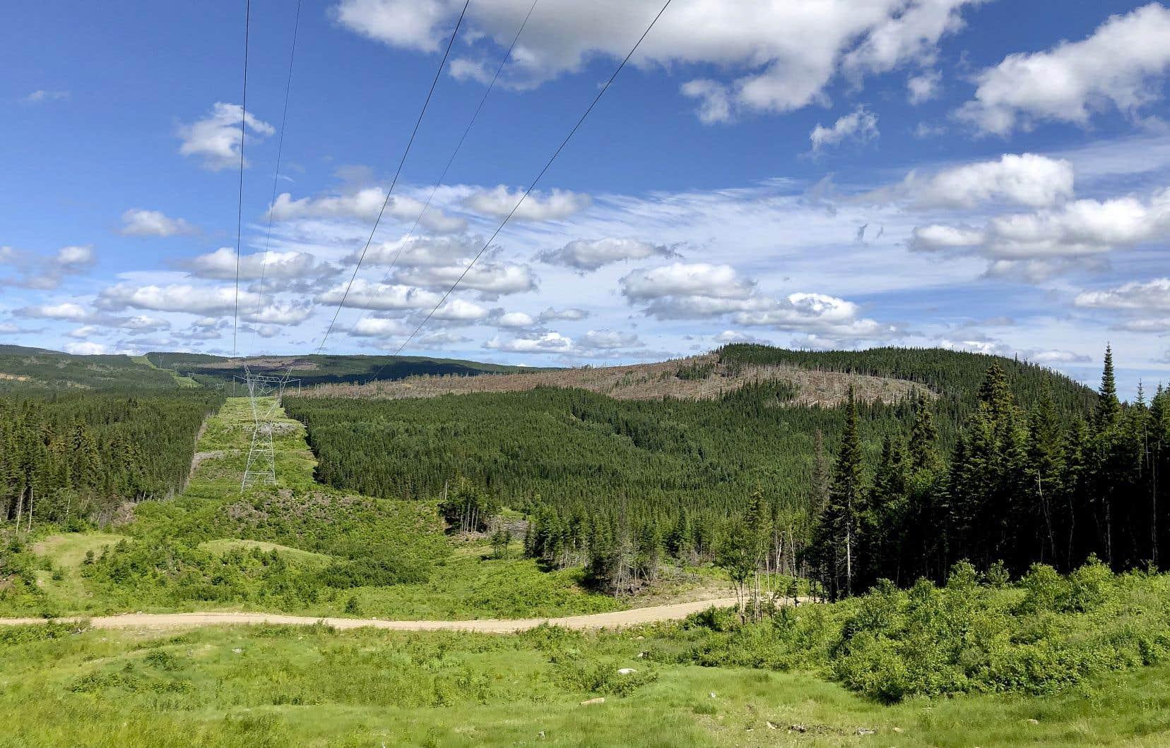L'ancien chemin des Poteaux, qui a été aménagé dans les années 1870, croise les lignes hydroélectriques au cœur de la réserve faunique des Laurentides. En arrière-plan, une zone de coupe forestière à flanc de montagne.