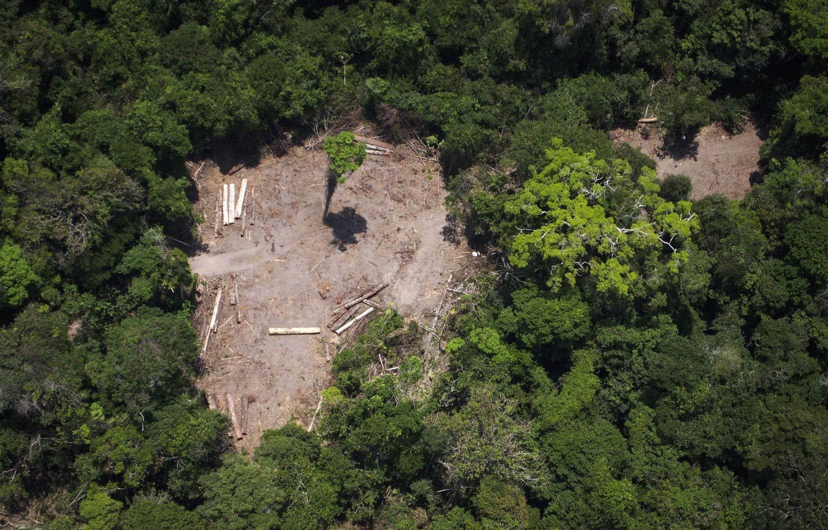 L'arrivée au pouvoir en janvier du président Bolsonaro, climatosceptique notoire, a suscité de nombreuses craintes au sujet de l'avenir de la forêt amazonienne, considérée comme le «poumon de la planète».
