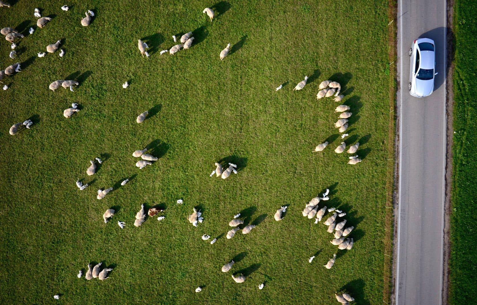 Les trois quarts de toutes les émissions de GES du secteur agricole viennent des produits d'origine animale.