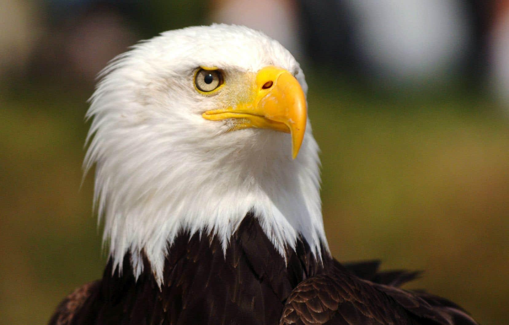 L'emblème même du pays, le pygargue à tête blanche, a notamment été sauvé de l'extinction grâce à cette loi.