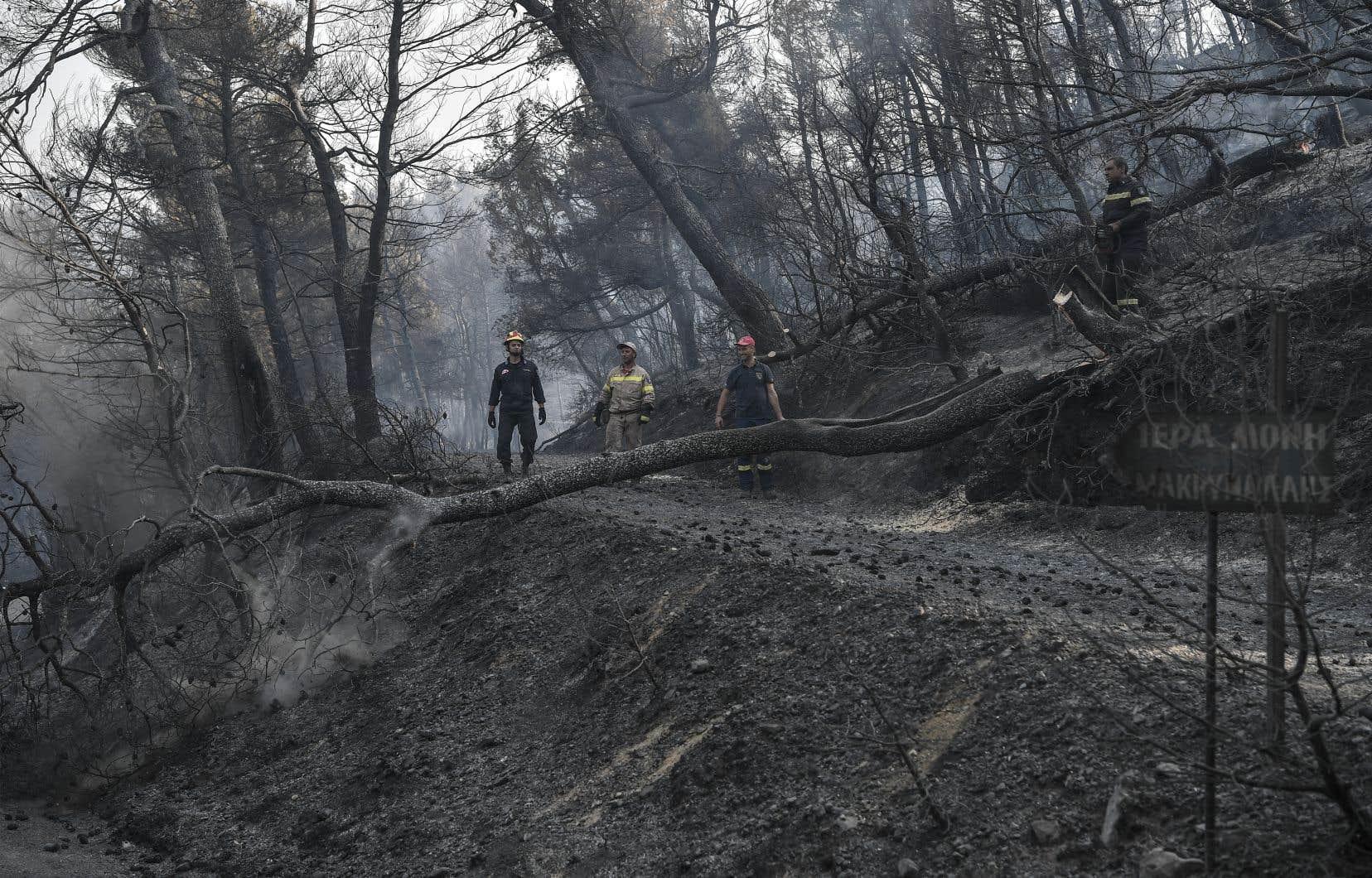 Les flammes ont endommagé 2400 hectares de forêt sur l'île grecque d'Eubée, dont une réserve naturelle.