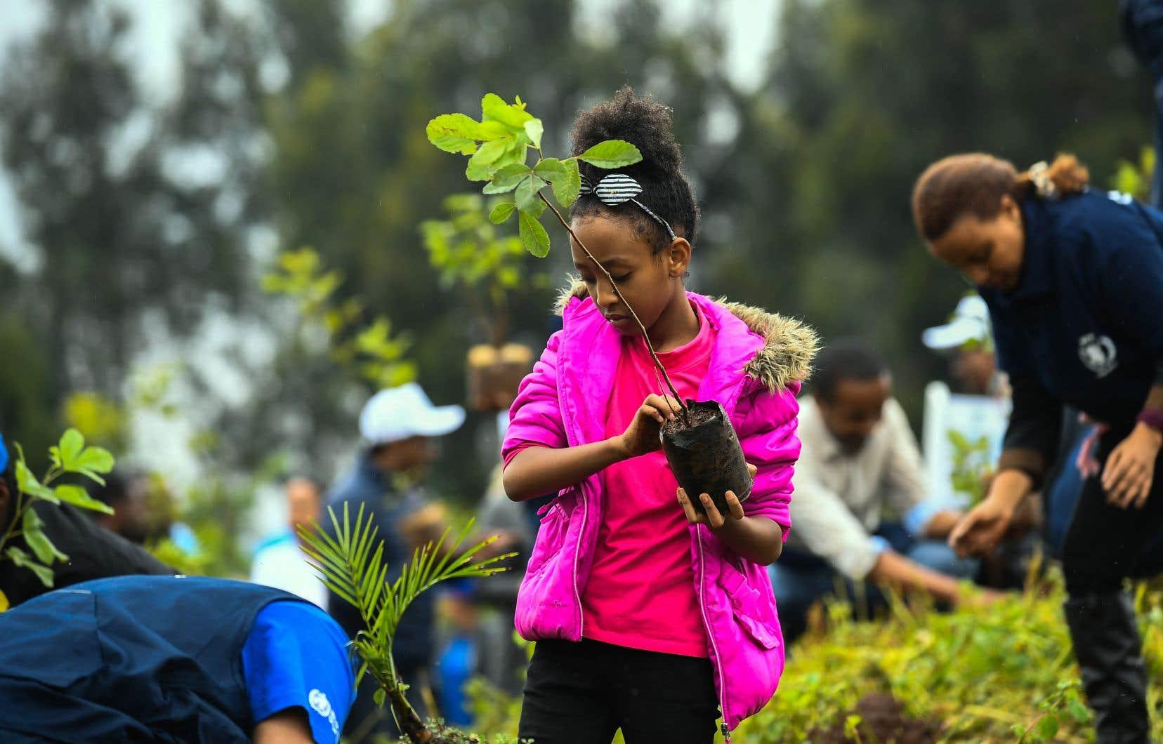 L'Éthiopie veut planter 4milliards d'arbres d'ici octobre. Une jeune fille a participé à l'effort du pays, dans la capitale, Addis-Abeba, en juillet.