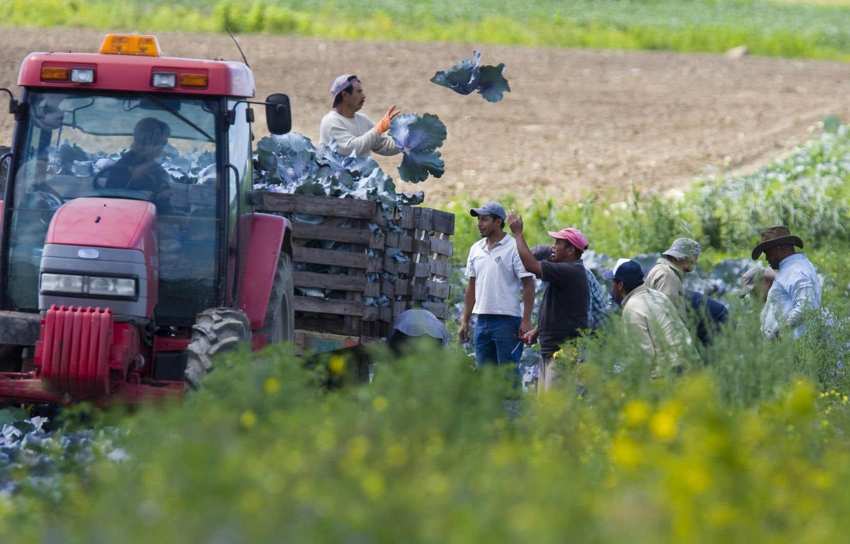 Des mesures aideront les travailleurs temporaires déjà au Québec — dans le milieu agricole, par exemple — ainsi que leurs conjoints, à bénéficier de services publics pour trouver du travail permanent dans la province.