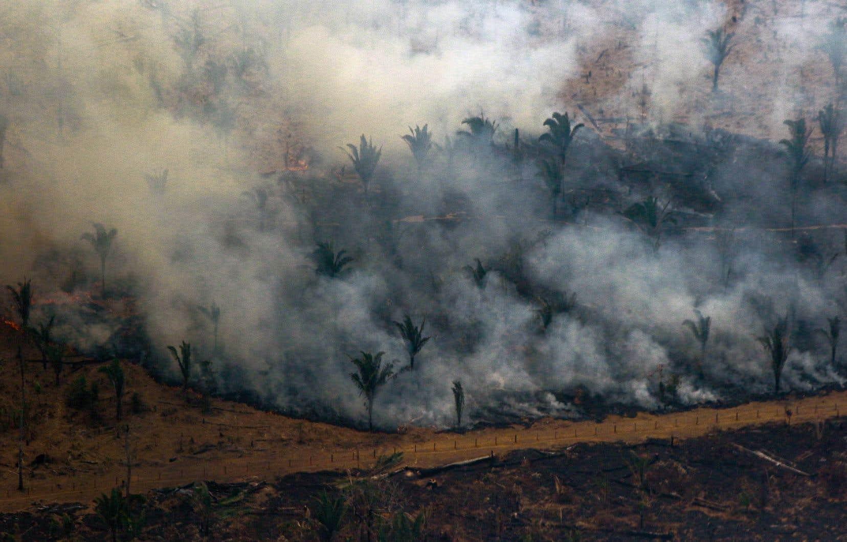 Mardi, près de 2500 hommes et une quinzaine d'avions étaient toujours mobilisés pour combattre l'ensemble des foyers d'incendie en Amazonie.