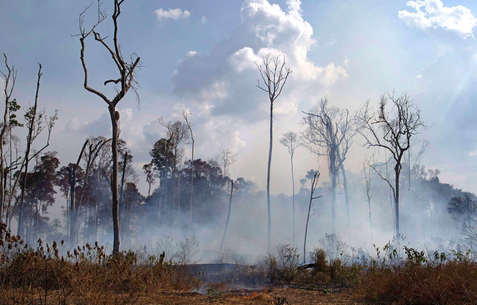 1 044 nouveaux départs de feu ont été constatés mardi dans tout le Brésil, dont plus de la moitié en Amazonie, a indiqué mercredi l'Institut national de recherche spatiale.