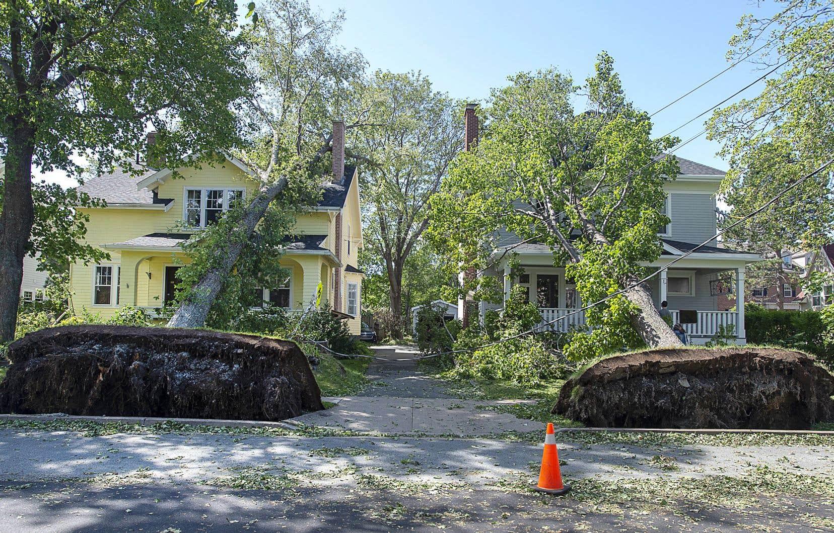 À Halifax, des arbres déracinés se sont écrasés sur des maisons, sans faire de blessés graves.