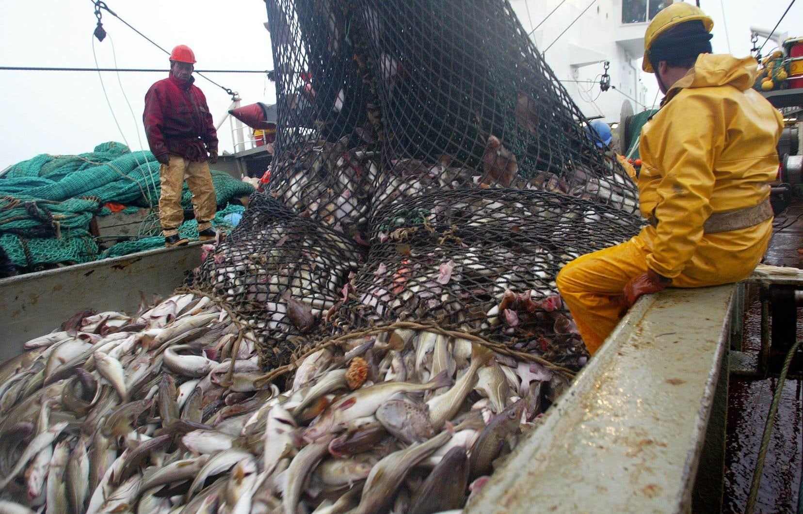 La morue a fait l'objet d'une pêche commerciale intensive pendant plusieurs décennies, ce qui a conduit à un déclin marqué de l'espèce.