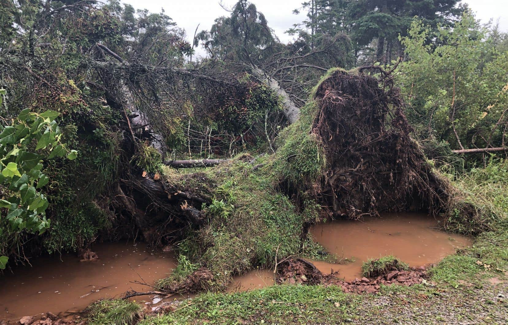 «Certaines de ces zones sont tellement endommagées que nous n'avons pas encore réussi à faire venir nos équipes là-bas pour commencer à les évaluer», a déclaréBrad Romaniuk,gestionnaire de Parcs Canada.