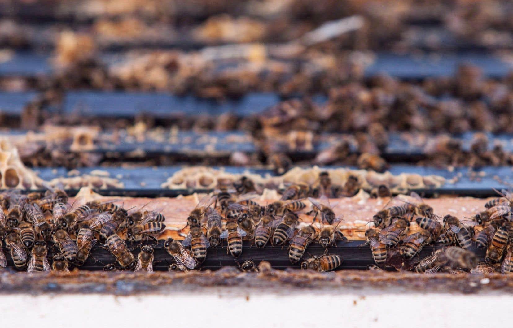 Il a été démontré que les néonicotinoïdes sont à l'origine d'une décimation des colonies d'abeilles.