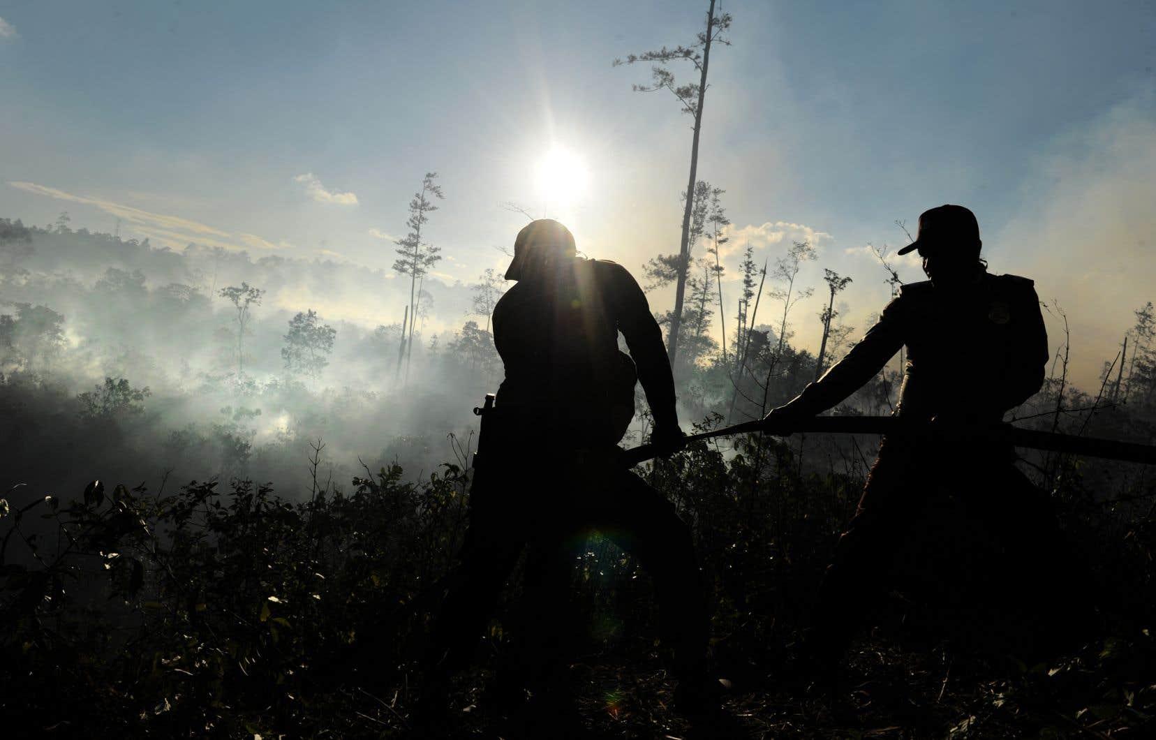 On incendie des forêts en Indonésie afin de permettre la production de l'huile de palme.