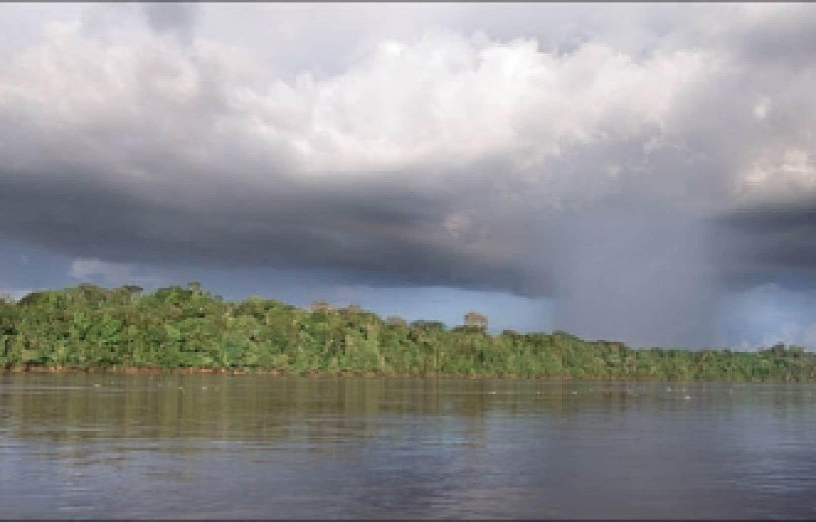 La disparition des forêts humides représenterait une perte économique de 5000 milliards $US par année.<br />