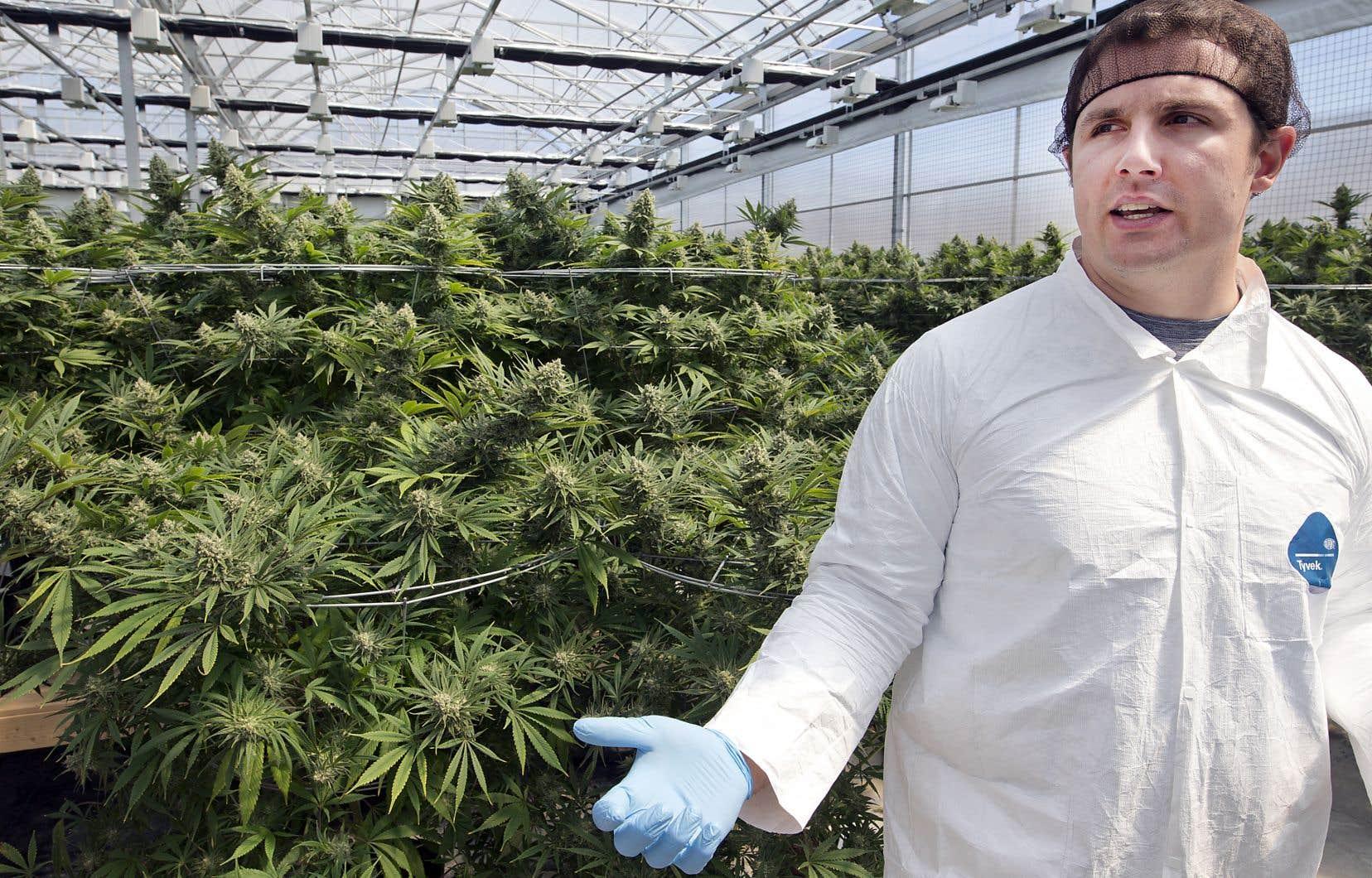 L'ouverture plus lente que prévu de magasins de la SQDC et le retard de la date d'approbation gouvernementale des produits dérivés du cannabis figurent parmi les facteurs qui jouent contre Hexo, estime le p.-d.g., Sébastien St-Louis.