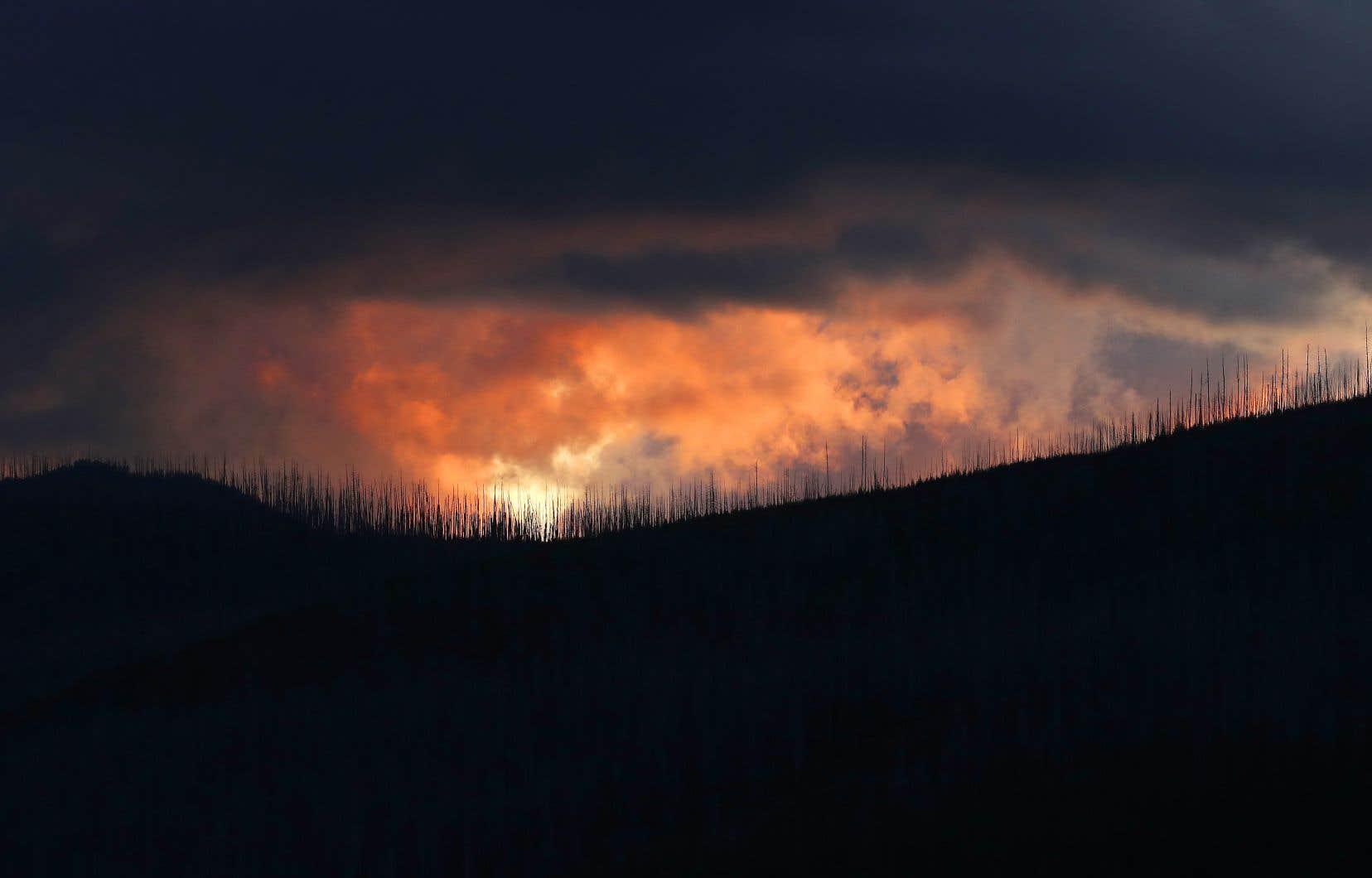 Ce que la philosophe française Joëlle Zask appelle les «mégafeux» sont des phénomènes planétaires sans précédent qui ravagent les forêts.