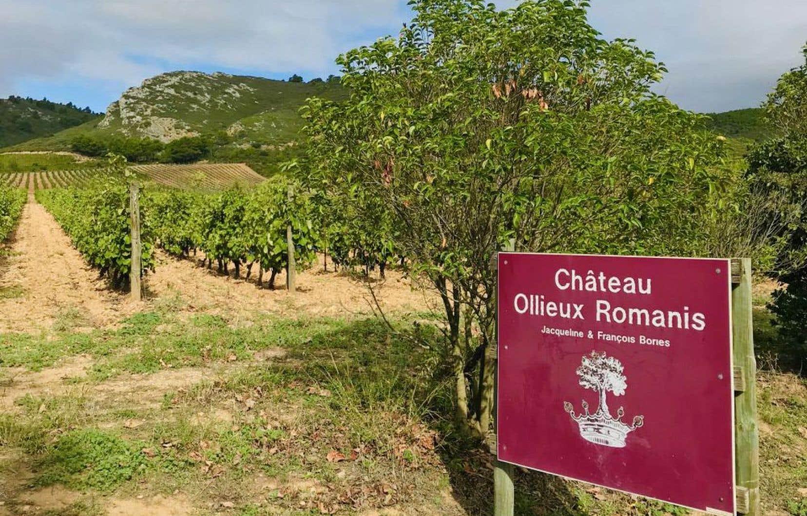 Quelques AOC se démarquent nettement, dont celles de Corbières Boutenac où les vins de Pierre Bories s'illustrent, au château Ollieux Romanis.