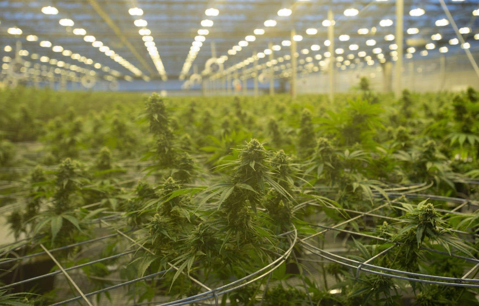 L'entreprise établie à Gatineau a notamment justifié sa décision par les ouvertures moins rapides que prévu des boutiques de cannabis, principalement au Québec et en Ontario.