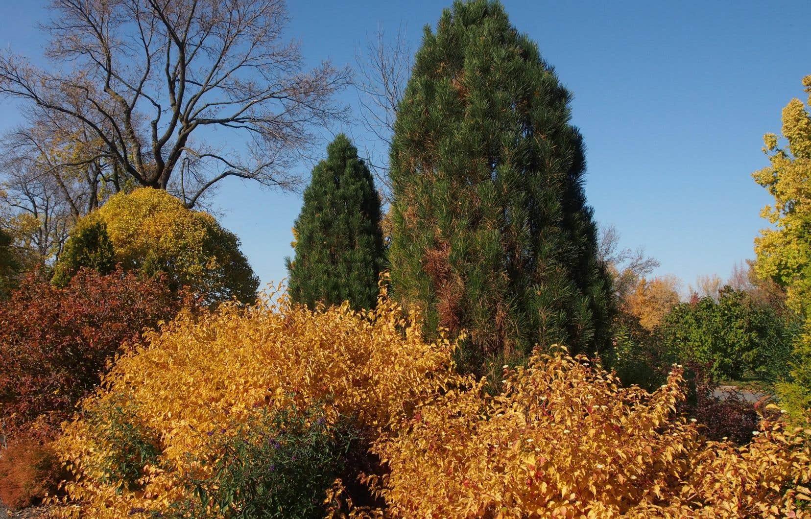 Avec la diminution de la photopériode et la baisse de la température, de nombreuses transformations biochimiques sont déclenchées, chez les feuillus comme chez les conifères, les végétaux ligneux, les plantes annuelles et les vivaces.