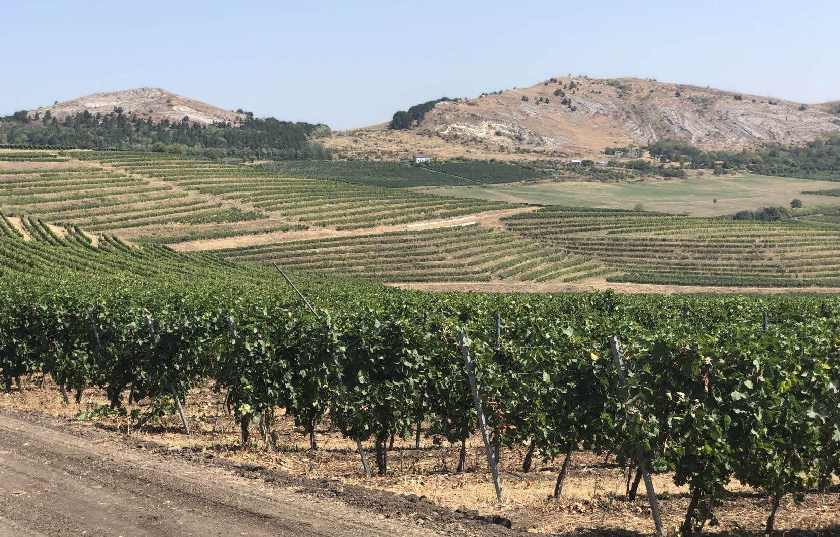 Le vignoble Buduaresca fondé en 2007, a misé sur l'expertise d'un œnologue britannique pour créer des vins élégants avec une touche moderne.