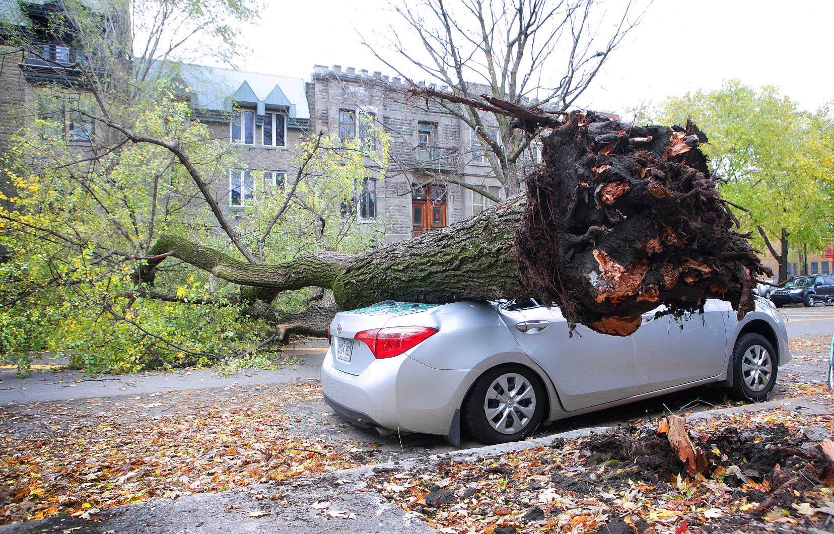 Le Québec a été frappé par une violente tempête vendredi: pluies diluviennes dans certaines régions, importantes chutes de neige en d'autres endroits, vents puissants qui ont déraciné des arbres et endommagé le réseau de distribution d'électricité.