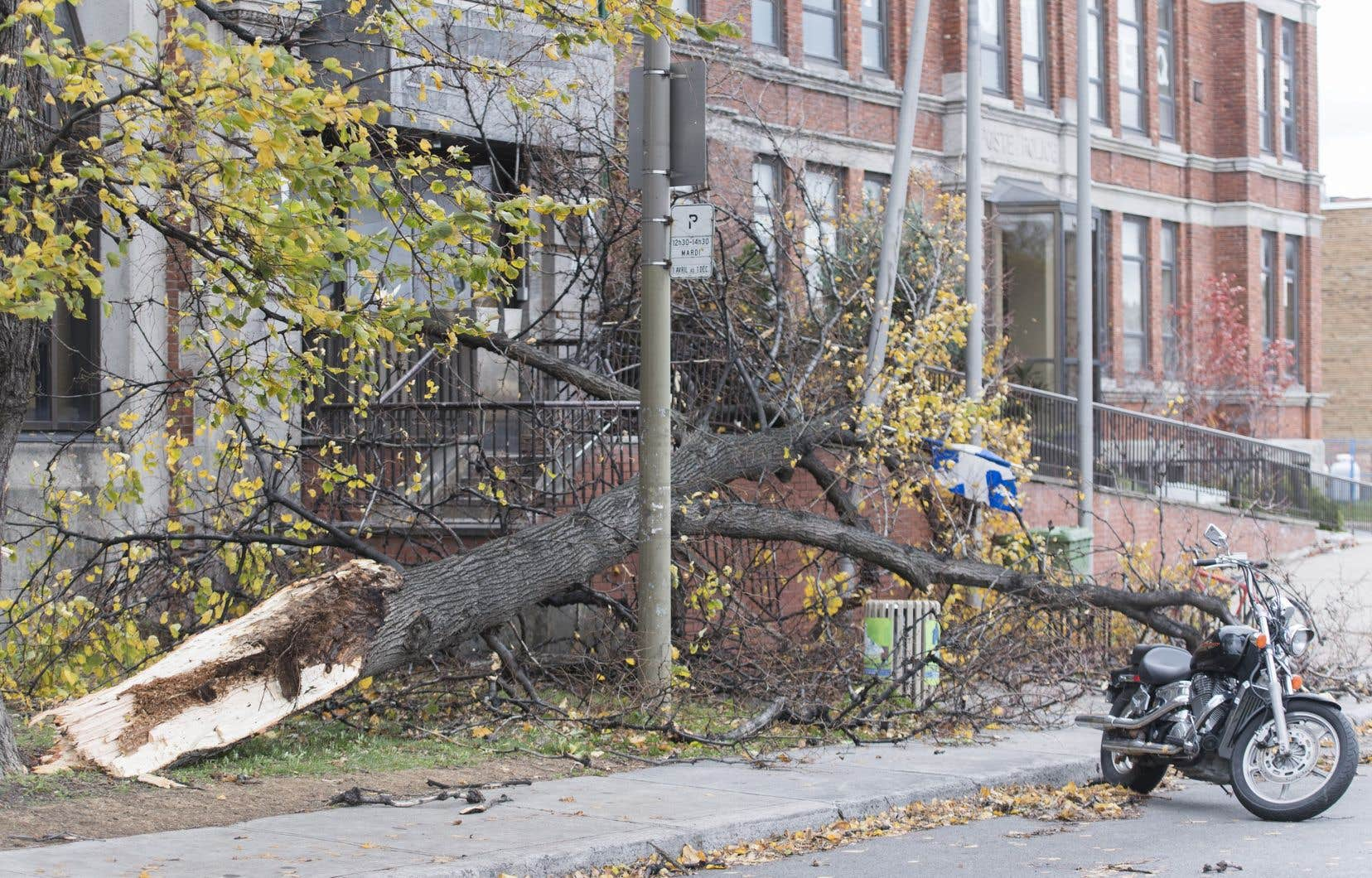 Une tempête automnale a provoqué vendredi de nombreux dégâts dans plusieurs régions de la province.