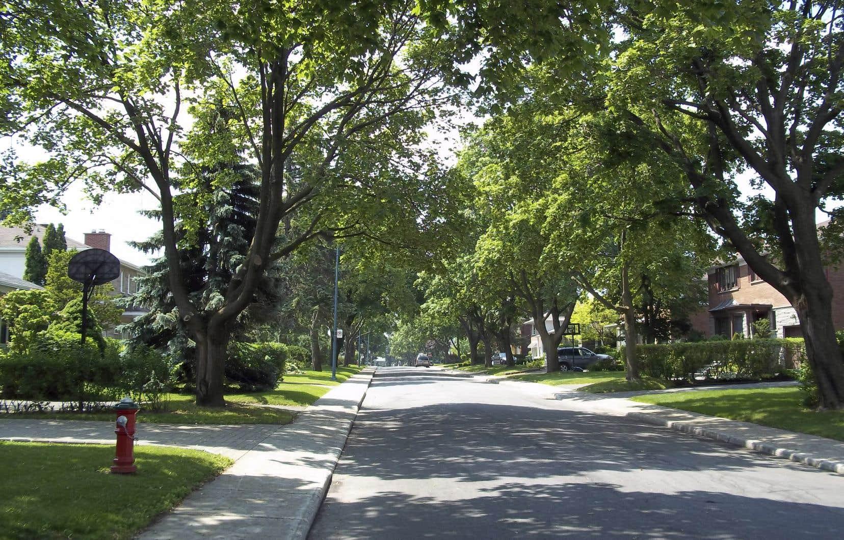 Les quartiers montréalais plus aisés, comme la ville de Mont-Royal (sur notre photo), ont généralement plus d'arbres que leurs voisins plus pauvres.