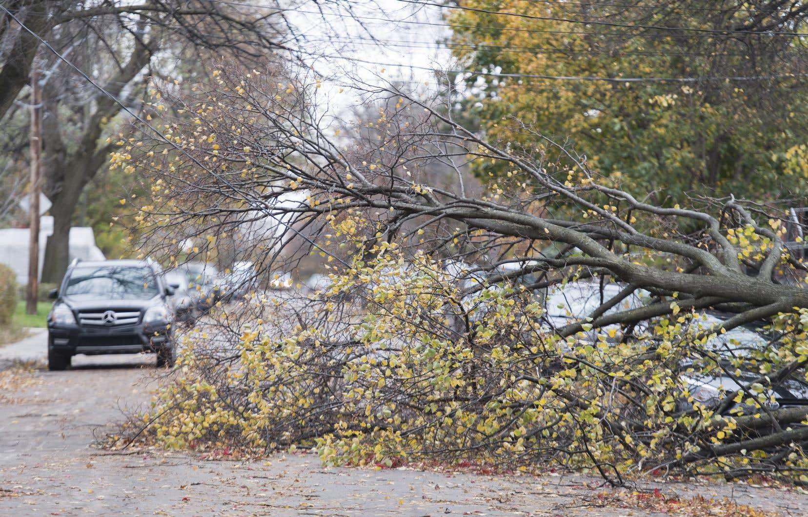 Jusqu'à 990000 foyers, commerces et entreprises ont été touchés par des pannes à la suite de la tempête de vendredi dernier.