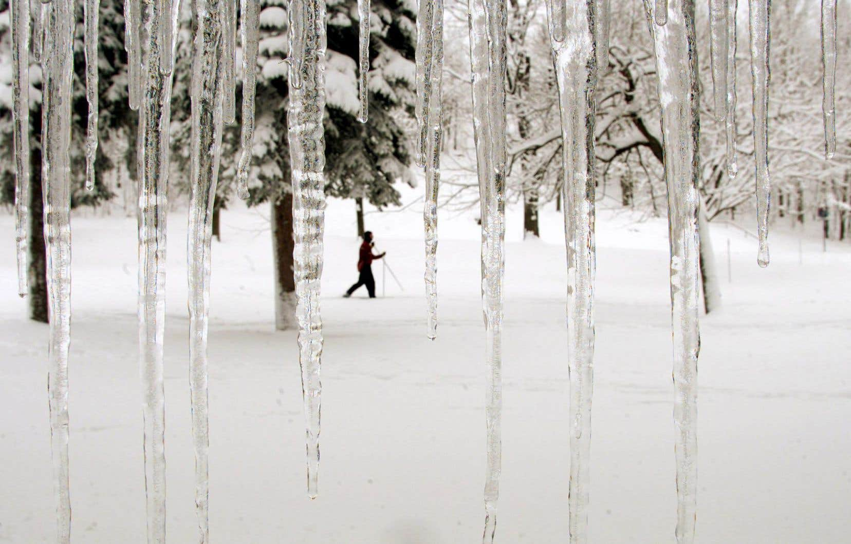 Un paysage hivernal sur le mont Royal, à Montréal