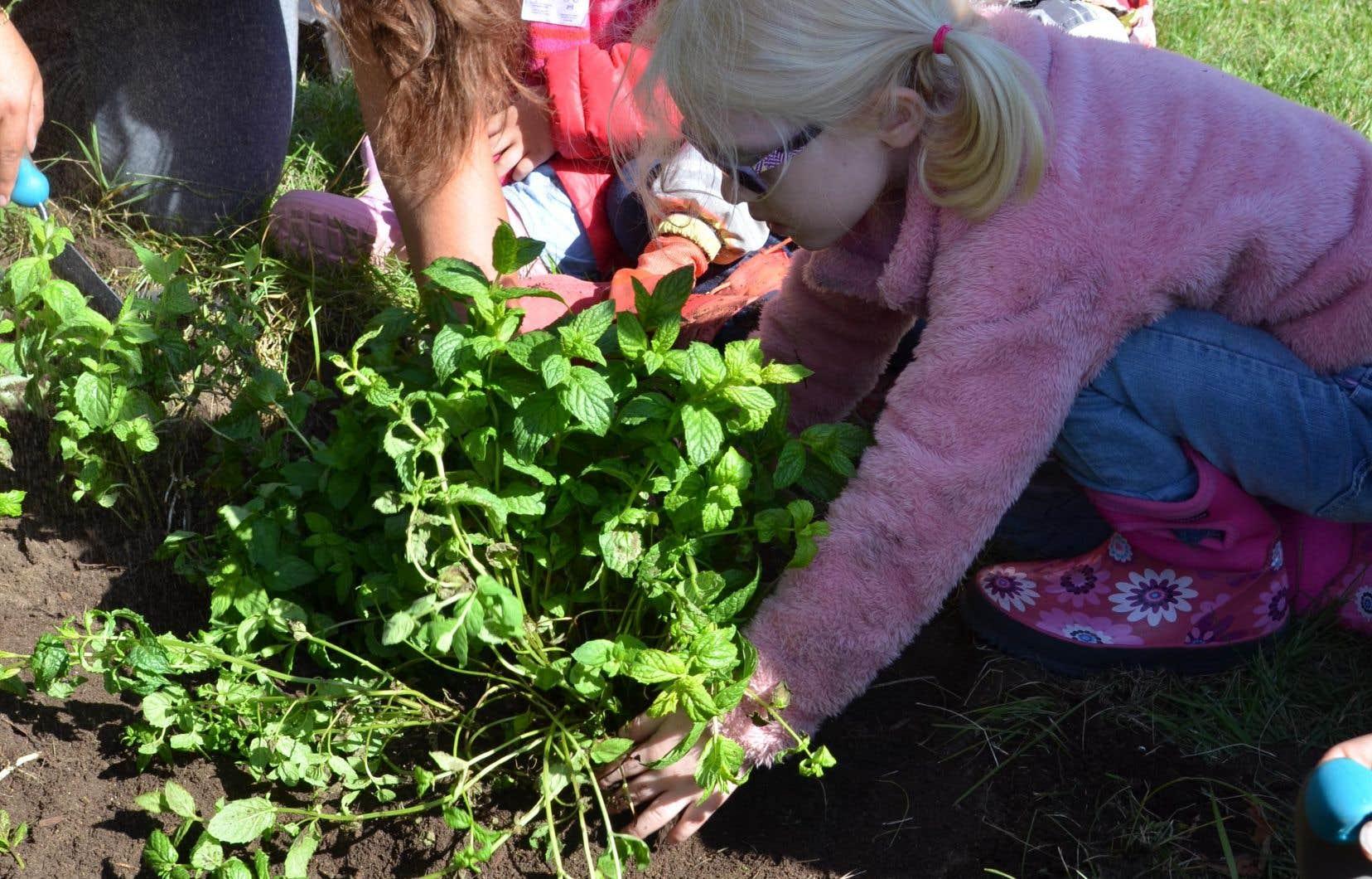 Le jardin communautaire del'école primaire Pie XII, àSaint-Prime