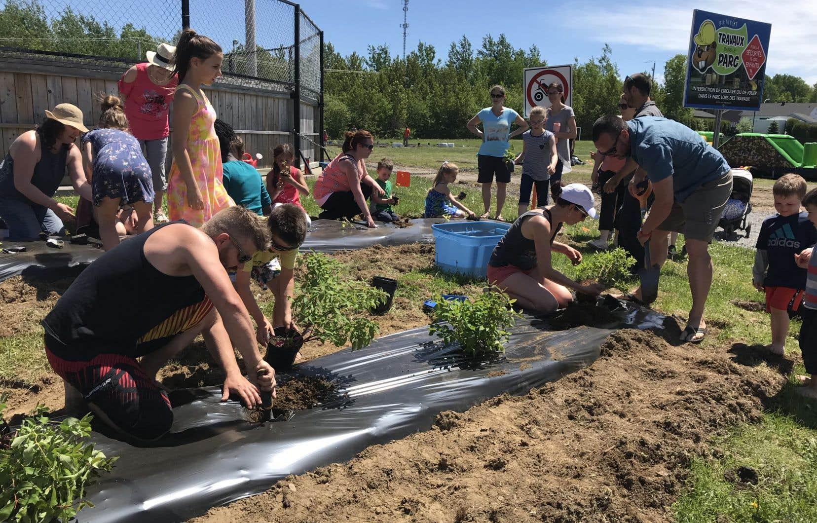 Un jardin communautaire d'Alma.  Dans cette municipalité située au pays des bleuets,  les citoyens ont la possibilité d'influencer  les projets de développement durable.