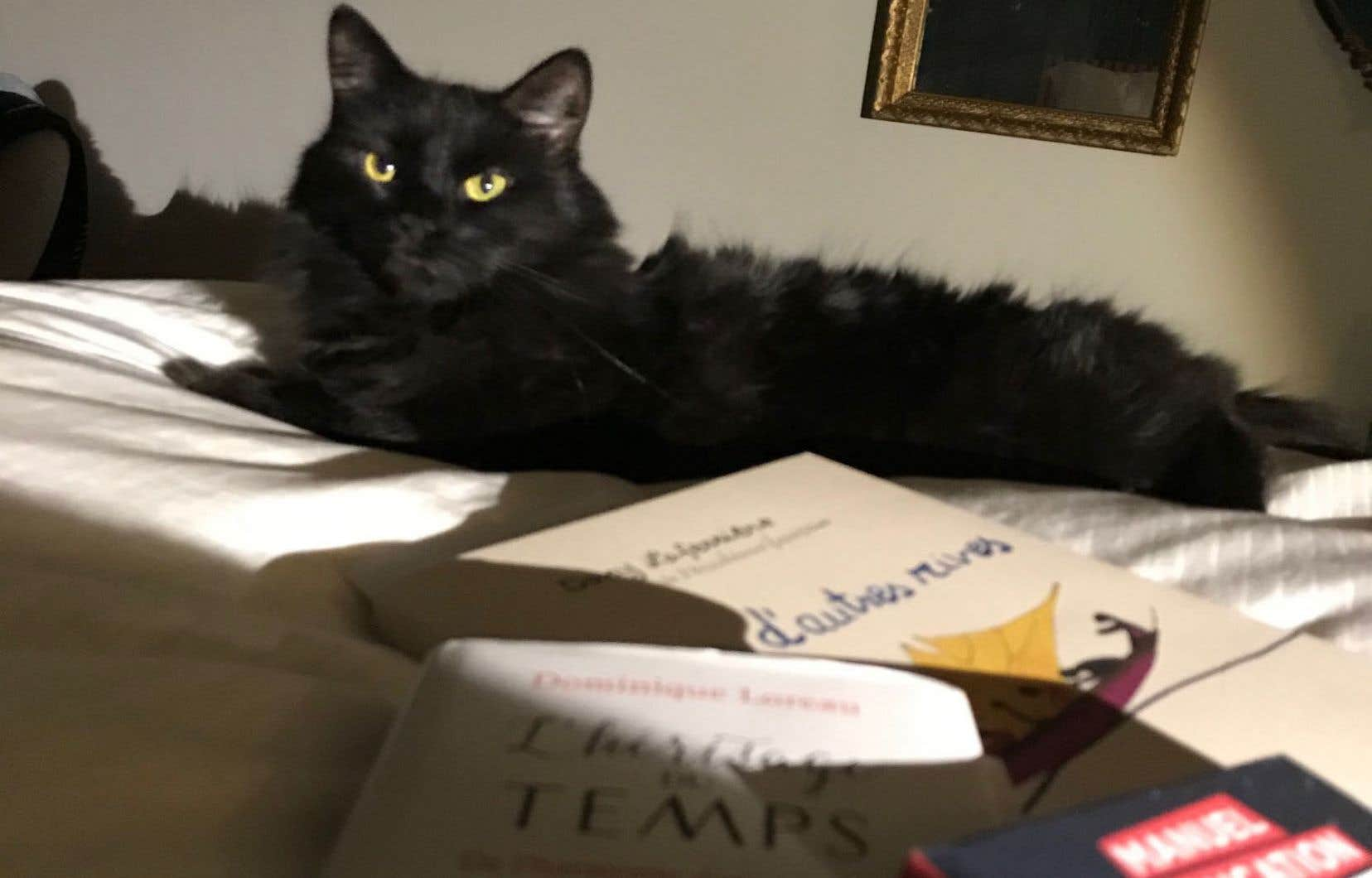 Léonie, aidante naturelle et porte-parole officielle de mon Salon du livre à l'horizontale. Solidarité féline.