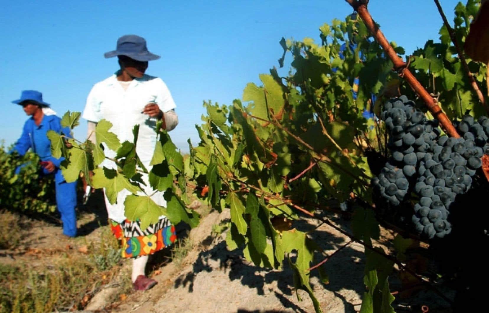 Exploitation vinicole en Afrique du Sud. Le peu d'intérêt des bailleurs de fonds pour les projets de développement agricole est dénoncé depuis plusieurs années par les organisations non gouvernementales qui travaillent sur le terrain.<br />