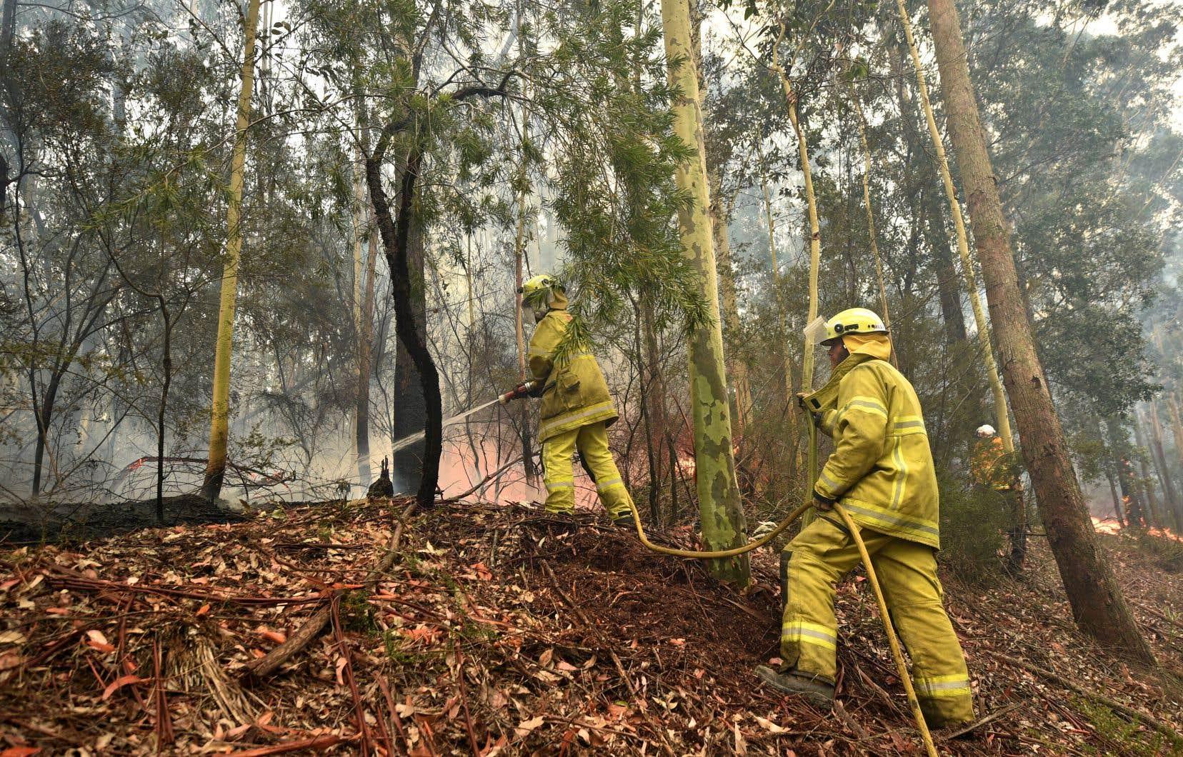 Des pompiers tentant de contenir un feu de brousse à Nowra, dans l'est de l'Australie, dimanche