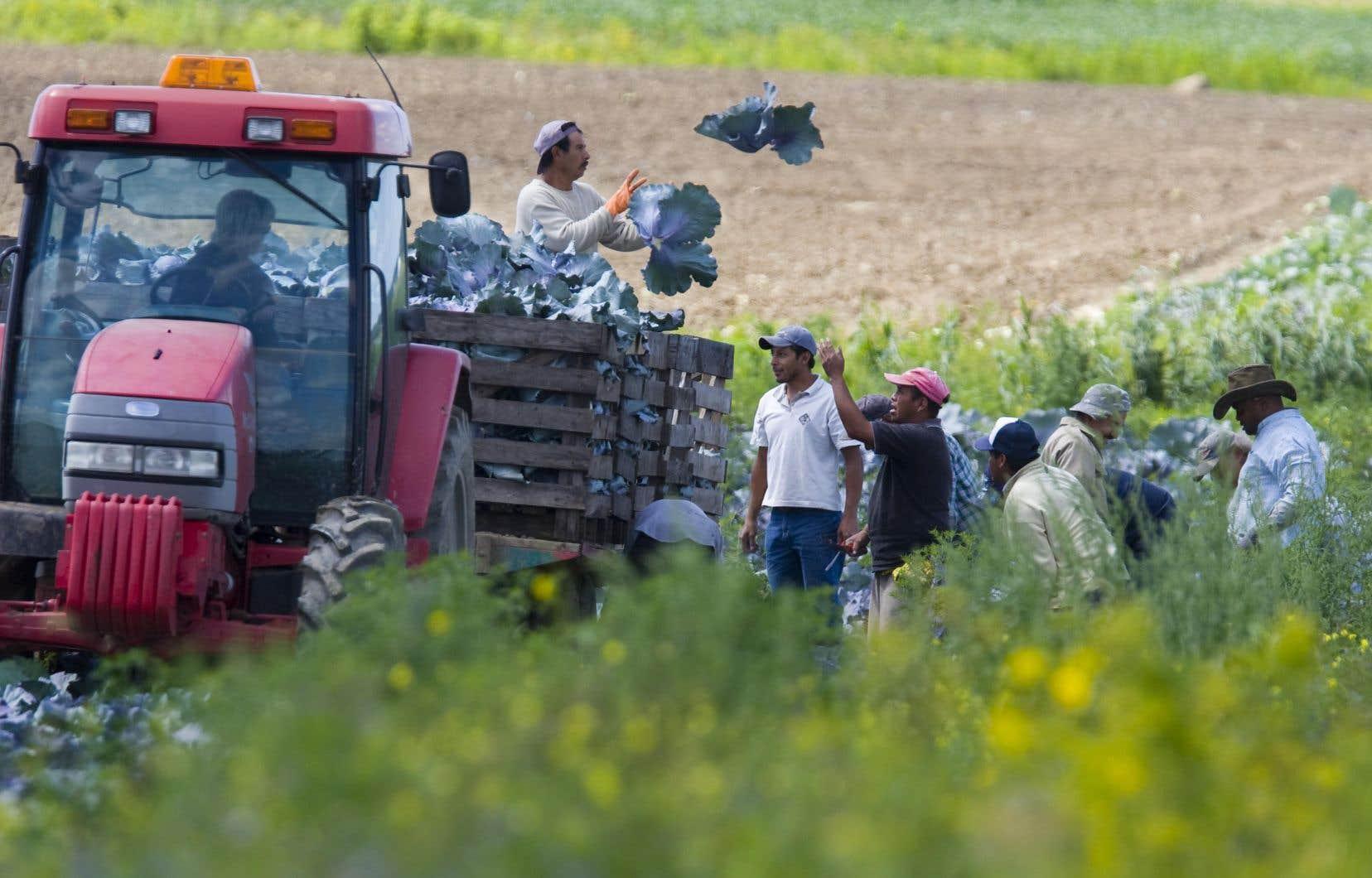 En 2018, pas moins de 15399 travailleurs étrangers temporaires ont rejoint les équipes de plus de 1200 entreprises agricoles au Québec. On estime qu'en 2029, le déficit de main-d'œuvre dans ce domaine s'élèvera à 19000 postes.