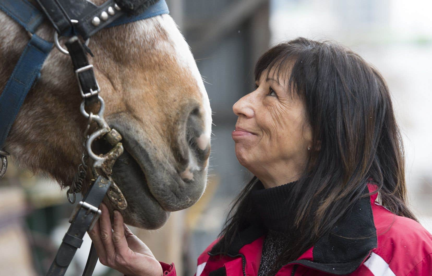 «Si les calèches sont éliminées à Montréal, c'est avant tout en raison de l'avancée des idées antispécistes portées sans relâche par quelques organisations de défense des droits des animaux», croit l'auteur.