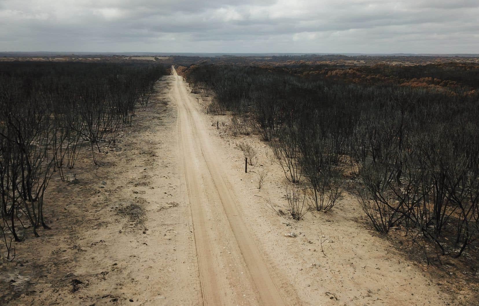 Dans le parc national de l'île Kangourou, situé dans le sud du pays, les flammes ont déjà tué une grande partie des koalas, oiseaux et marsupiaux endémiques.