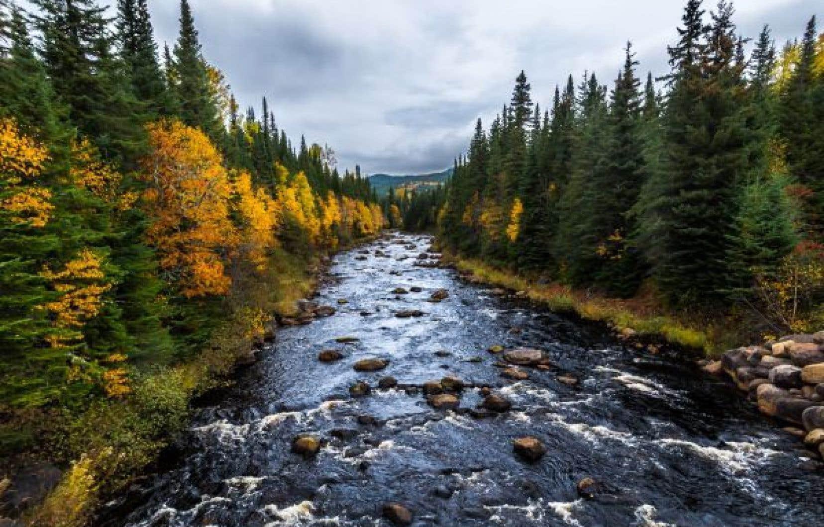 Pour compenser les GES qu'elle ne peut réduire, l'Université Laval mise sur son puits carbone de la forêt Montmorency,  la plus grande forêt d'enseignement et de recherche au monde, couvrant un territoire de 412km2.
