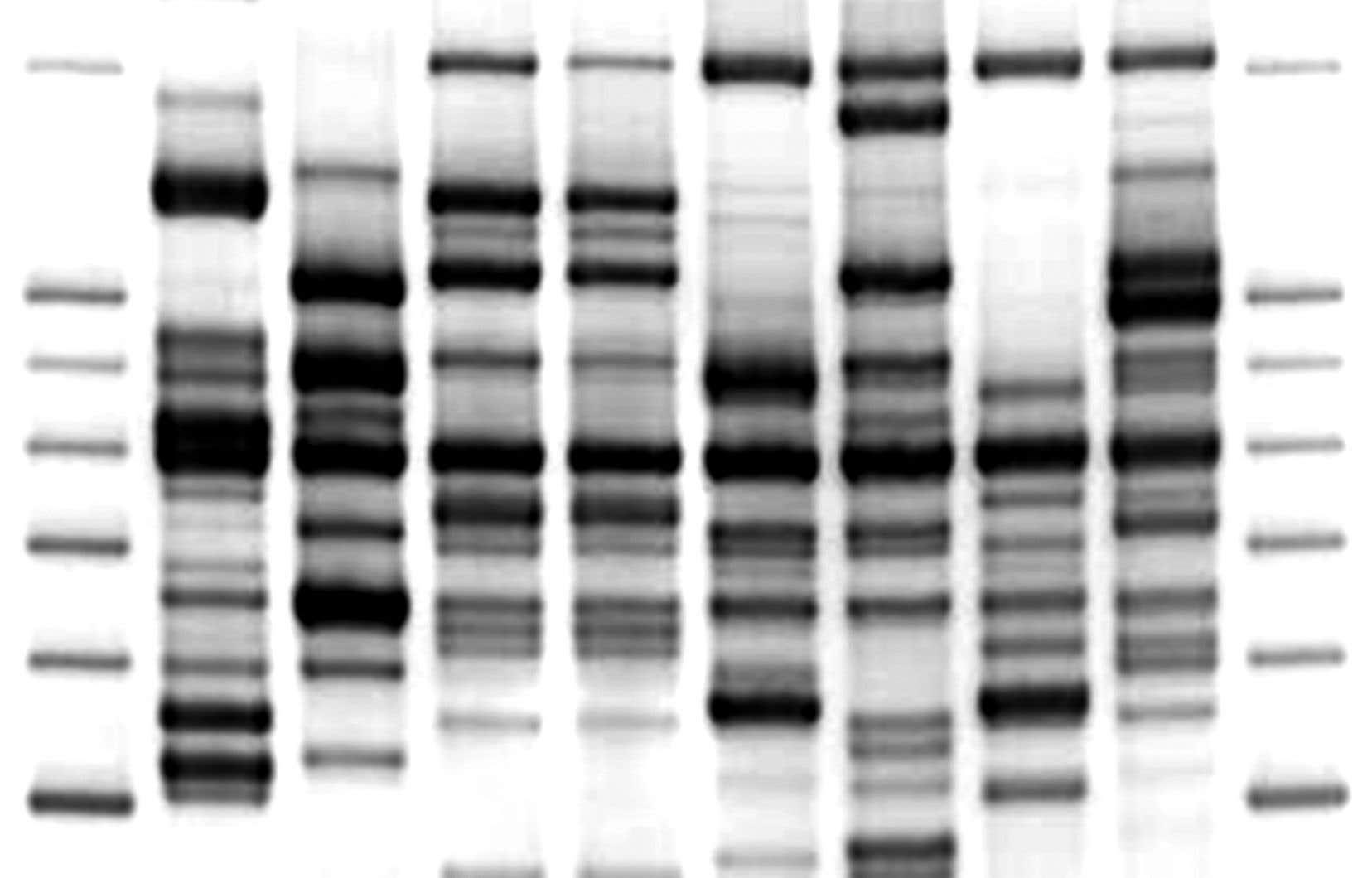 Le test d'ADN est la méthode la plus incontestable pour identifier un corps, mais il s'agit aussi du moyen le plus dispendieux et qui prend le plus de temps à exécuter. Il est donc bien souvent utilisé qu'en dernier recours.