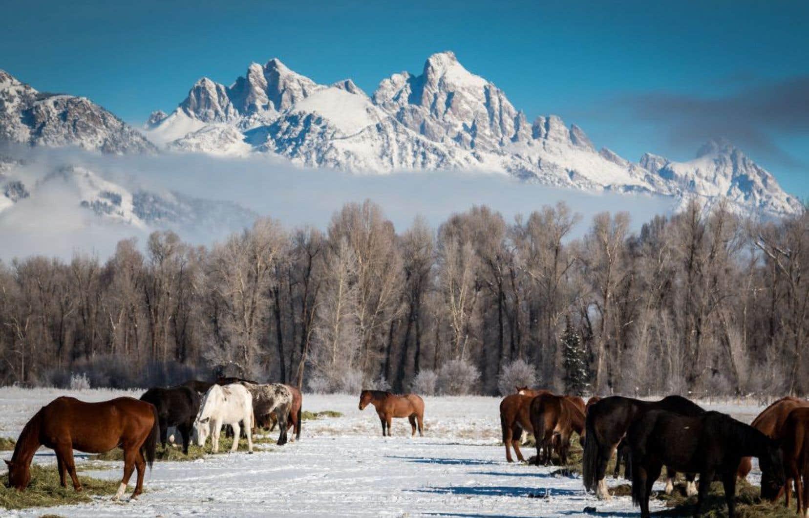 L'impressionnant massif montagneux du Grand Teton National Park, voisin immédiat de Jackson Hole.