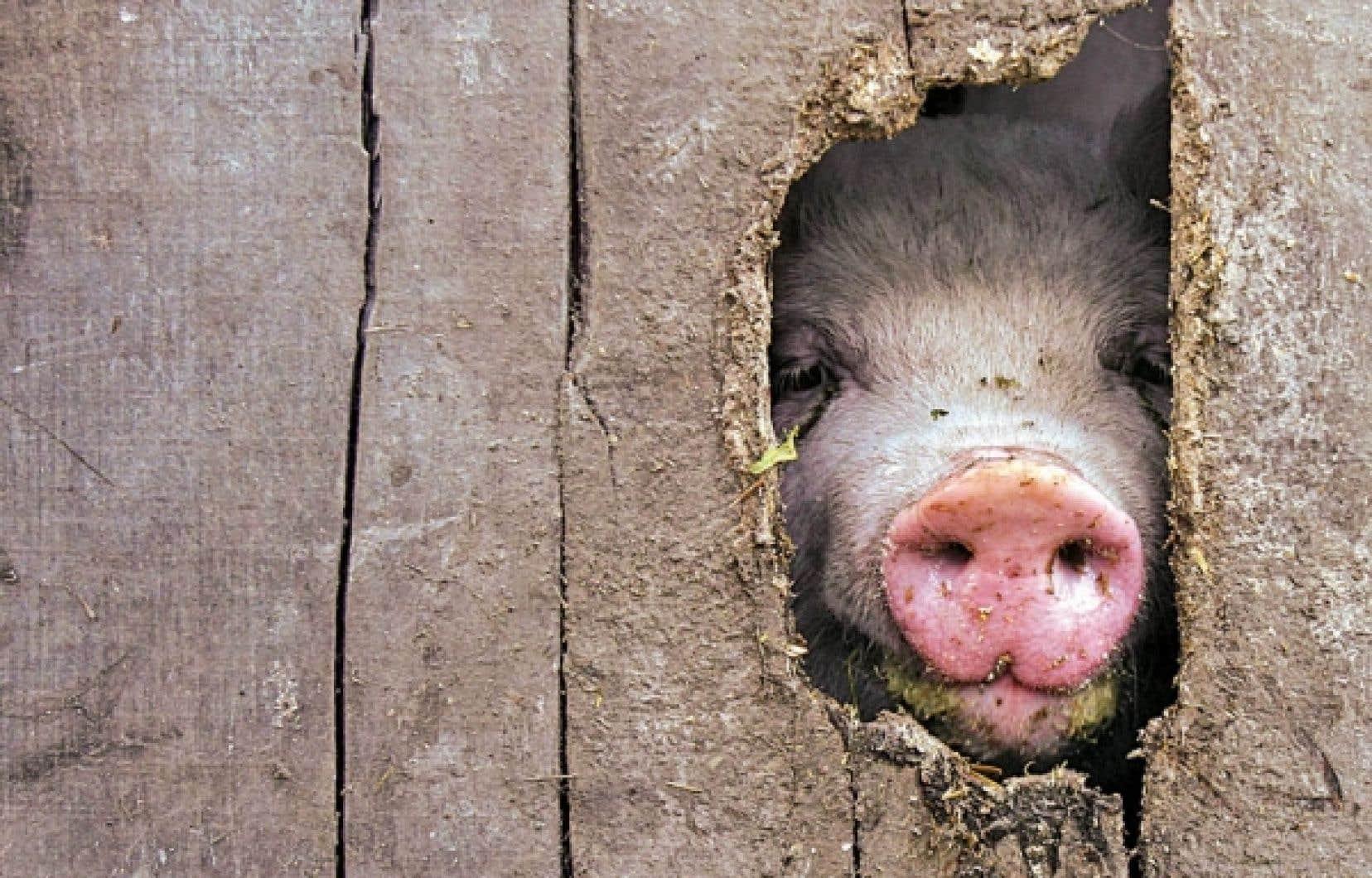 La Fédération des producteurs de porcs du Québec vient tout juste de se doter d'indicateurs de développement durable. <br />