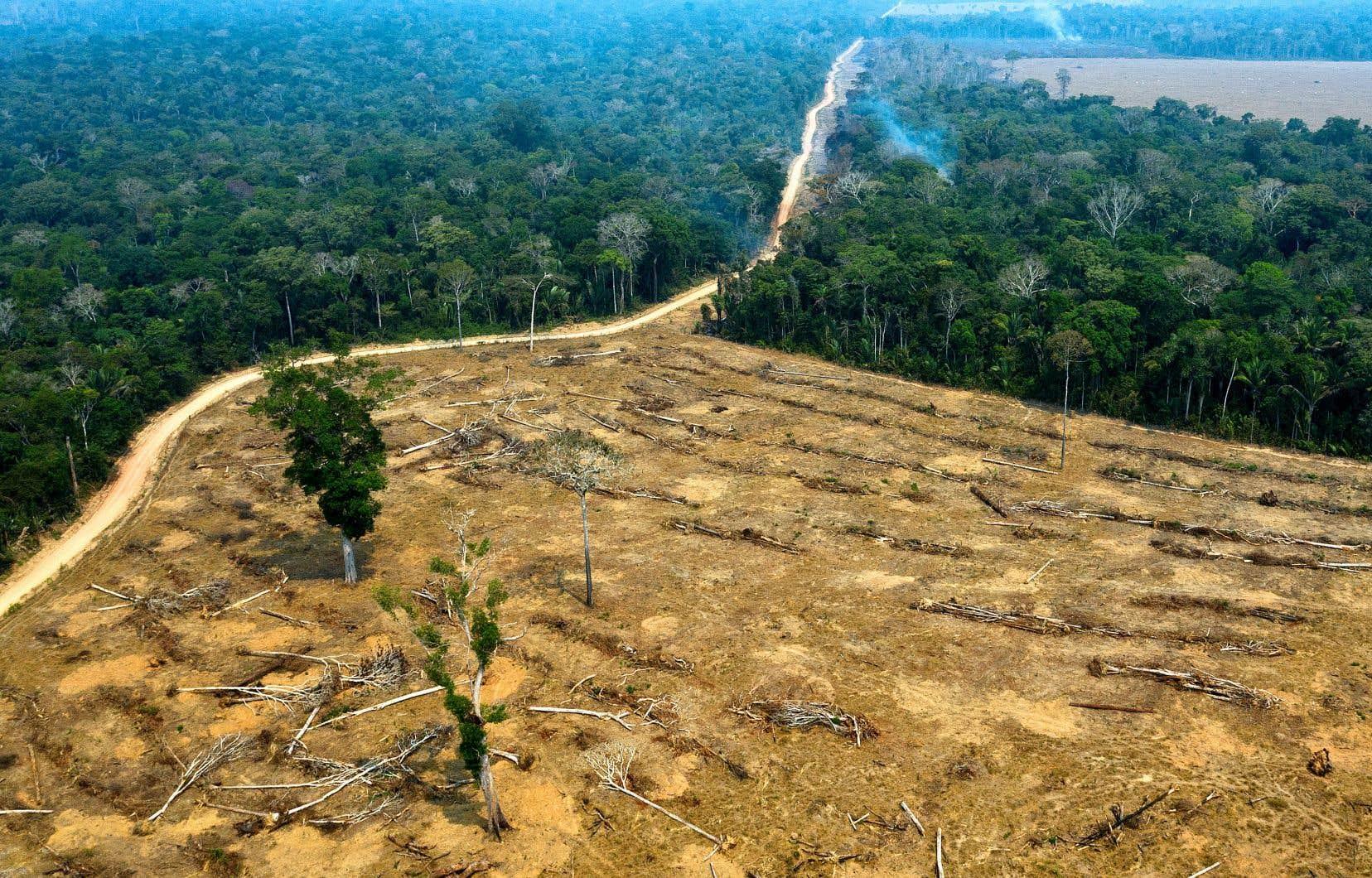 Environ 20% des 5,5 millions de kilomètres carrés de la forêt amazonienne ont été rasés depuis 1970, en grande partie pour cultiver du soja, de l'huile de palme, des biocarburants ou pour l'élevage bovin.